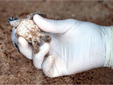 Photo of تحوّل من سرقة أعشاش السلاحف البحرية لحراستها