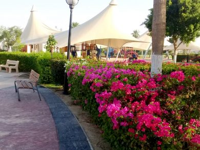 Photo of حدائق الشيحانية تستقبل الزائرين بالعيد