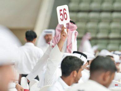 Photo of مزاد للخيل السبت المقبل