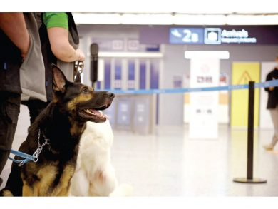 Photo of فنلندا: كلاب مدربة لرصد إصابات كورونا