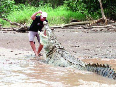Photo of صيد تمساح ضخم في ماليزيا