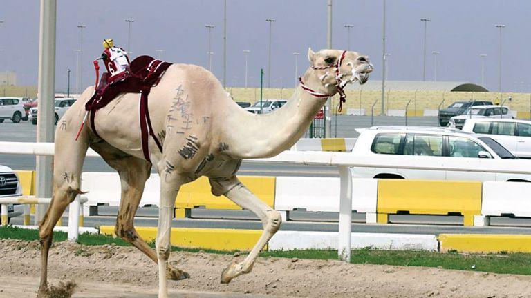 Photo of ختام السباق المحلي السابع للهجن