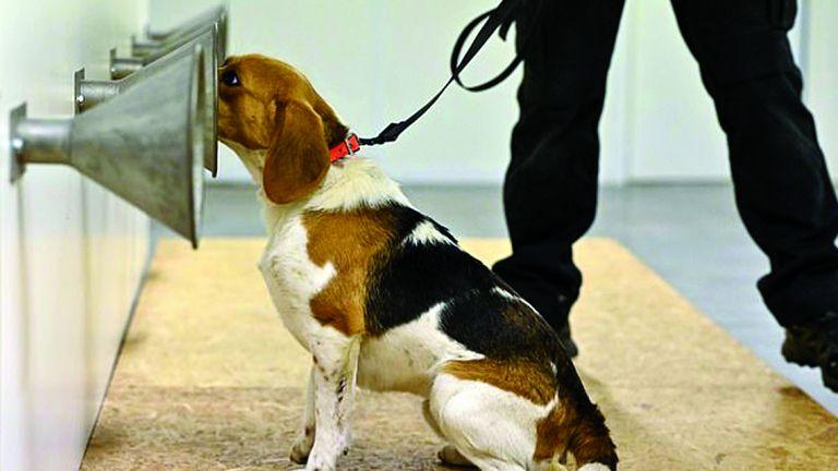 Photo of الكلاب تكشف كذب البشر