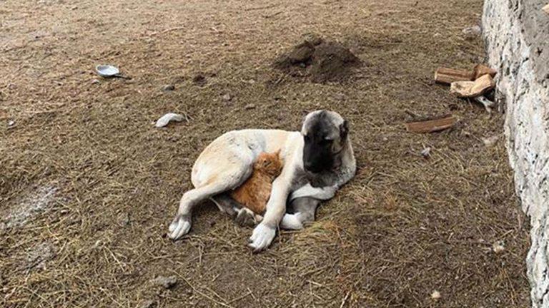 Photo of صداقة نادرة بين كلب وقطة