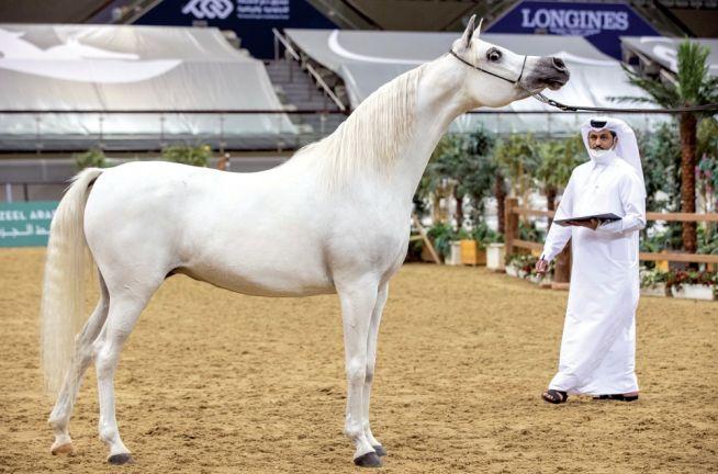 Photo of اختتام منافسات بطولة قطر الوطنية التاسعة لجمال الخيل العربية الأصيلة