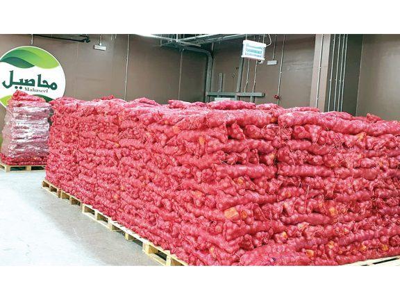 Photo of محاصيل: بدء طرح 1200 طن بصل بالأسواق