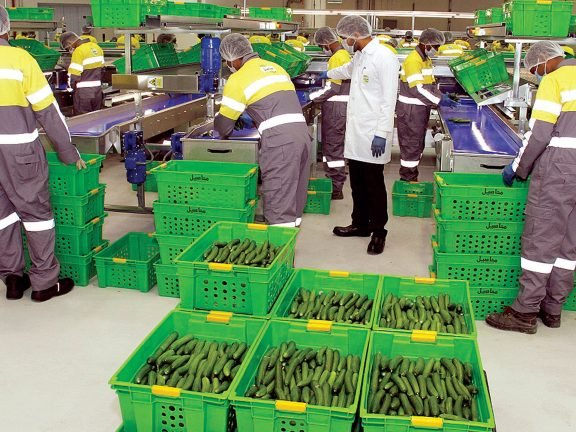 Photo of محاصيل: تسويق 10 ملايين كيلو من الخضراوات
