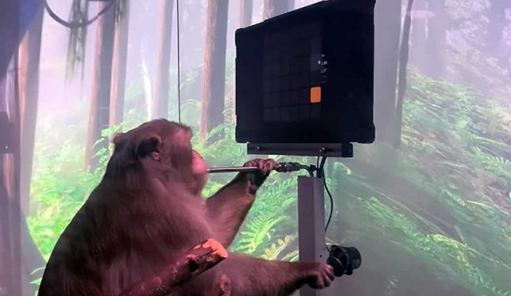 Photo of قرد يتحكم بلعبة فيديو بواسطة شريحة في دماغه من دون استخدام يديه