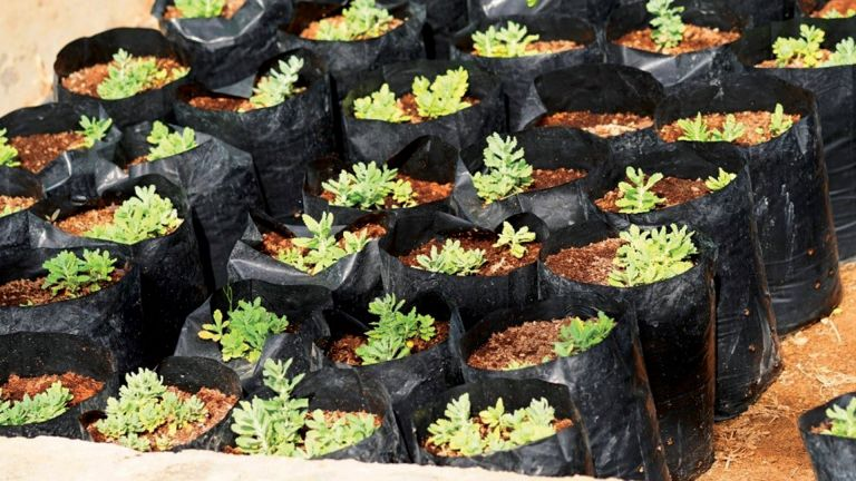 Photo of حملة لاستزراع نباتات برية نادرة في روضة السيج