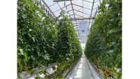Photo of تعاون بين جامعة حمد وحصاد لتطوير الزراعة