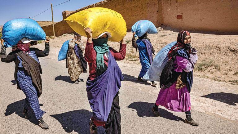 Photo of جانيات الورود بالمغرب يبحثن عن رزقهن بين الأشواك