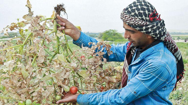 Photo of شحّ المياه يُهدد الزراعة في الأردن