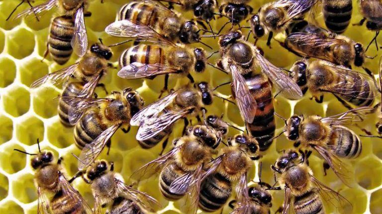 Photo of تدريب النحل في هولندا للكشف عن كورونا