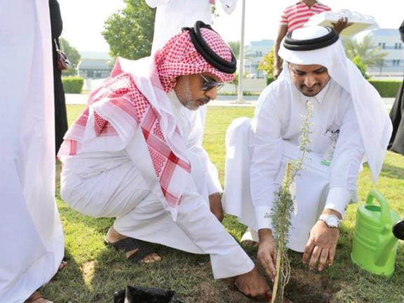 Photo of كهرماء: زراعة 70 شجرة من البيئة القطرية