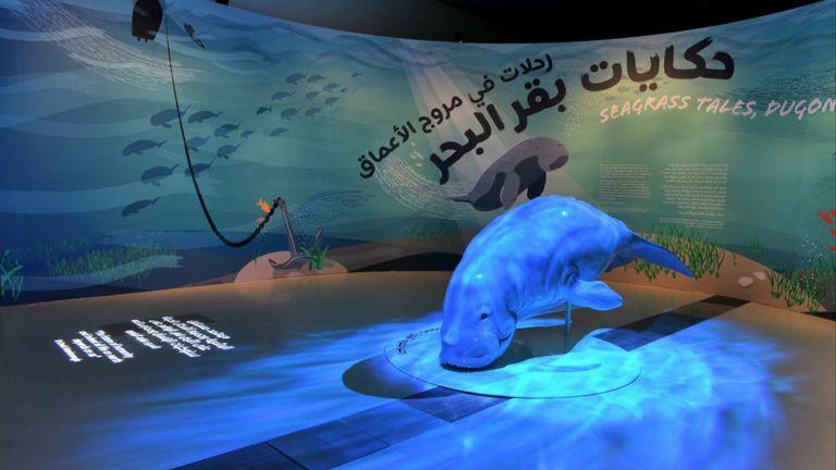 Photo of متحف قطر الوطني يفتتح أول معرض للتاريخ الطبيعي حول ثدييات بقر البحر في المياه القطرية