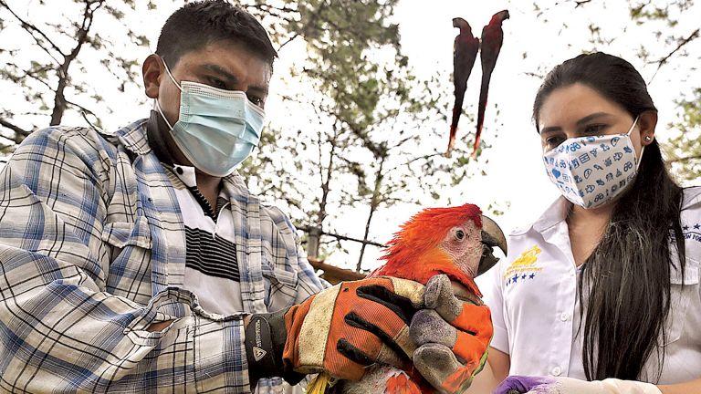 Photo of مشروع وطني لحماية الطيور في هندوراس