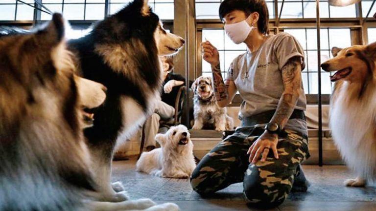 Photo of الحيوانات تعلّم الإنسان التعايش مع الضغط النفسي