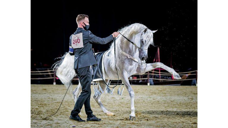 Photo of الإعلان عن الفائزين في مسابقة صور الخيول العربية