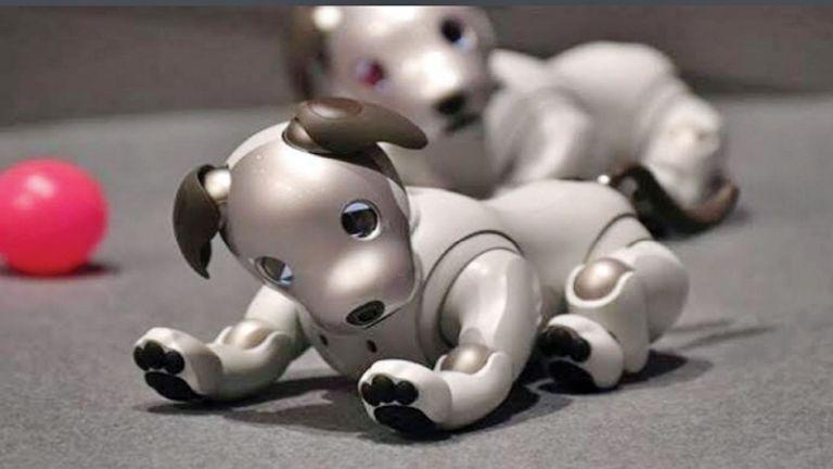 Photo of تعليم كلب آلي كيفية السير في الظروف المختلفة