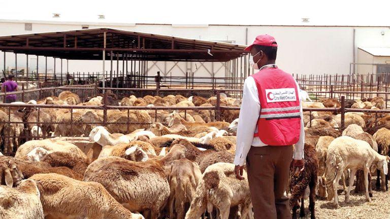 Photo of الهلال الأحمر يوزع الأضاحي على 4500 أسرة بالسودان