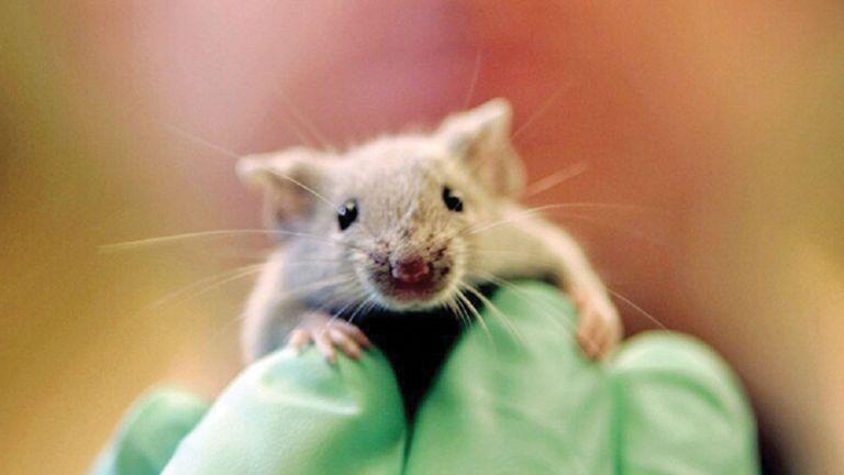 Photo of فأر يقتحم جلسة برلمان في إسبانيا