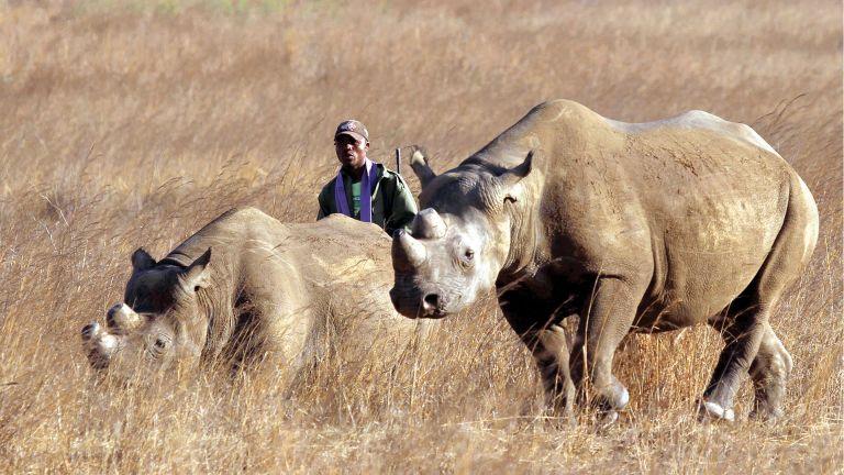 Photo of حيوانات وحيد القرن على وشك الانقراض