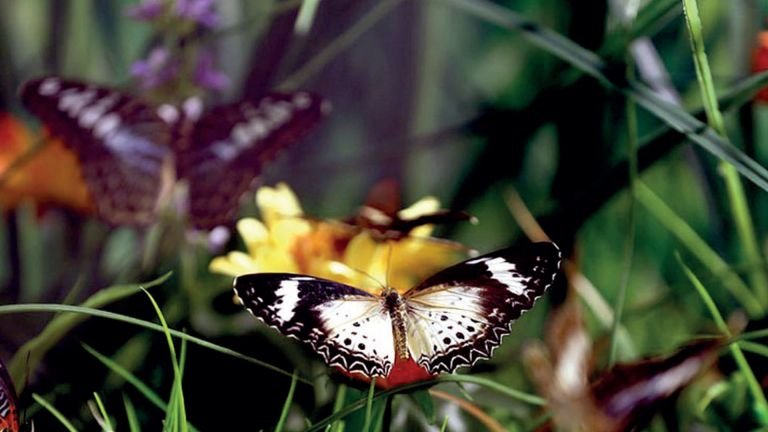 Photo of حديقة تركية لتكاثر الفراشات الاستوائية