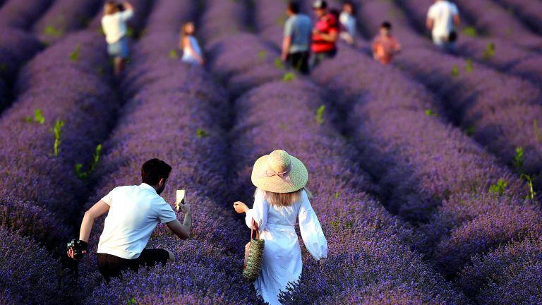 Photo of زراعة الخزامى تزدهر في مولدافيا