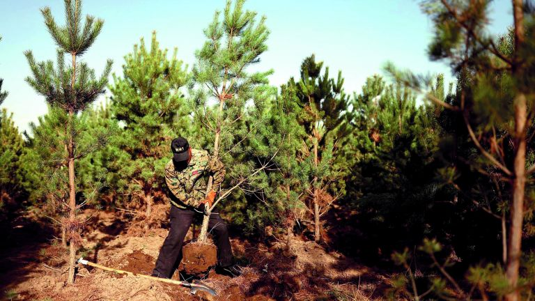 Photo of الصين ستزرع 36 ألف كم من الغابات سنويًا