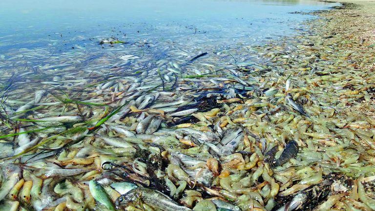 Photo of إسبانيا: احتجاجات على نفوق الأسماك في «مار مينور»