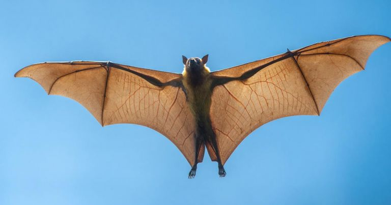 Photo of الخفافيش بعد ولادتها تناغي كالرضّع من البشر