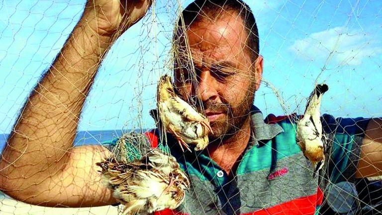 Photo of حظر صيد طيور السمّان في غزة