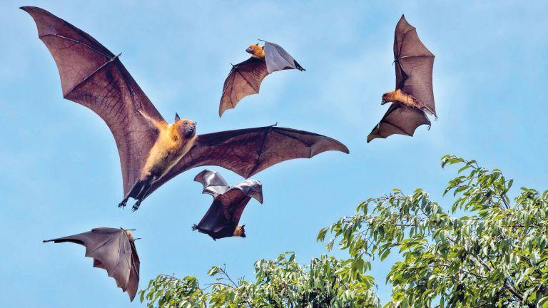 Photo of خفافيش لاوس تحمل فيروسات شبيهة بكورونا