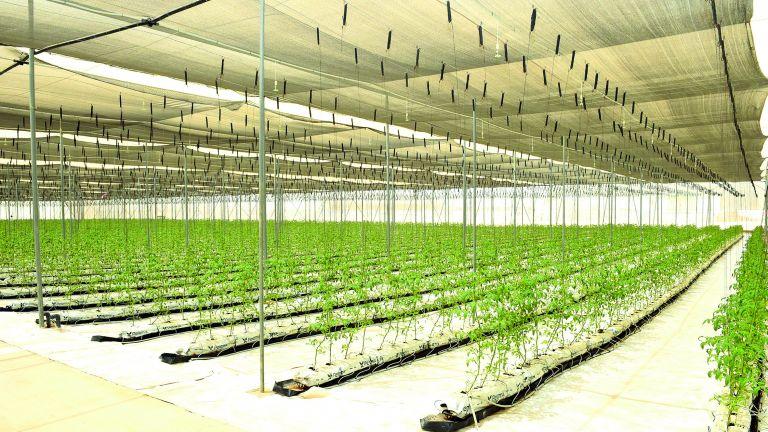 Photo of تغييرات هيكلية في القطاع الزراعي القطري