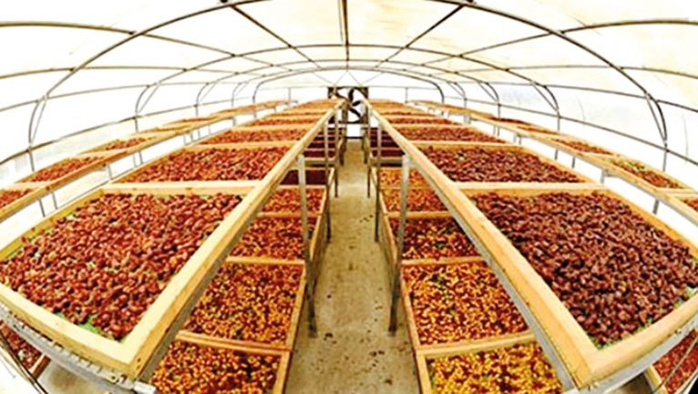 Photo of توزيع 100 غرفة لتجفيف التمور على المزارع
